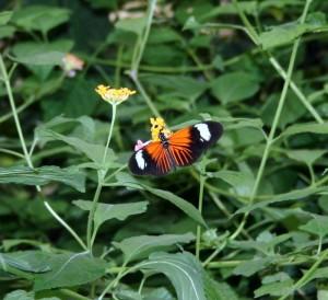 Inside the butterfly farm. Copyright CareerBreakSecrets.com