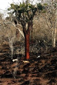 Cactus tree in the dry terrain of Island. Copyright CareerBreakSecrets.com