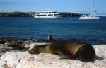 Sea lions resting on Isla Lobos in the Galapagos Islands. Copyright CareerBreakSecrets.com