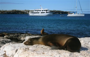 Sea lions resting on Isla Lobos in the Galapagos Islands. Copyright CareerBreakSecrets.com