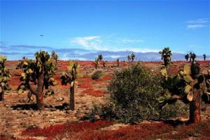 South Plaza Island landscape. Copyright CareerBreakSecrets.com
