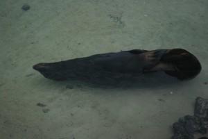 Sea lion during water yoga on Genovesa Island. Copyright CareerBreakSecrets.com